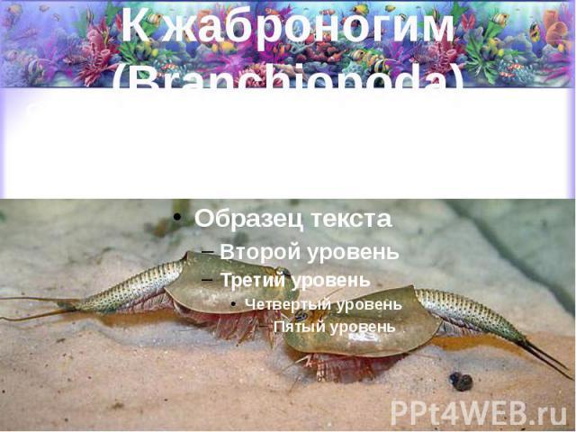 К жаброногим (Branchiopoda) Относятся пресноводные формы (водяные блохи, щитни и др.) и живущая в соленых озерах и лиманах артемия.