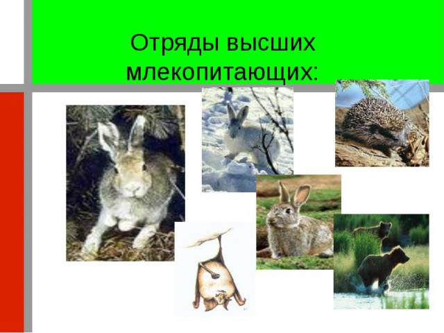 Отряды высших млекопитающих: