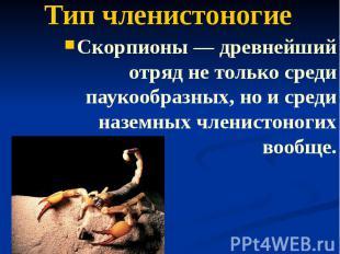 Тип членистоногие Скорпионы — древнейший отряд не только среди паукообразных, но