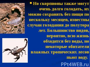 Но скорпионы также могут очень долго голодать, их можно сохранять без пищи по не