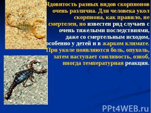 Ядовитость разных видов скорпионов очень различна. Для человека укол скорпиона,