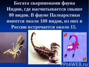 Богата скорпионами фауна Индии, где насчитывается свыше 80 видов. В фауне Палеар