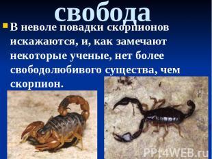 свобода В неволе повадки скорпионов искажаются, и, как замечают некоторые ученые