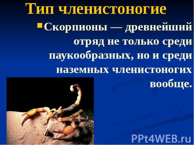 Тип членистоногие Скорпионы — древнейший отряд не только среди паукообразных, но и среди наземных членистоногих вообще.