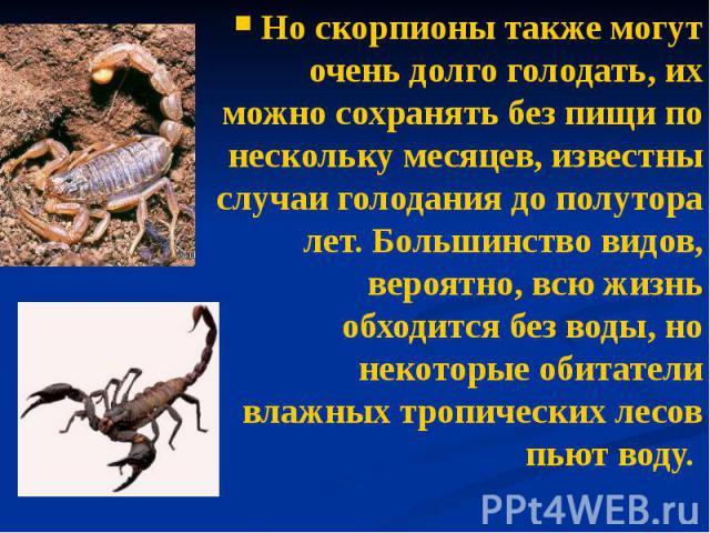 Но скорпионы также могут очень долго голодать, их можно сохранять без пищи по нескольку месяцев, известны случаи голодания до полутора лет. Большинство видов, вероятно, всю жизнь обходится без воды, но некоторые обитатели влажных тропических лесов п…
