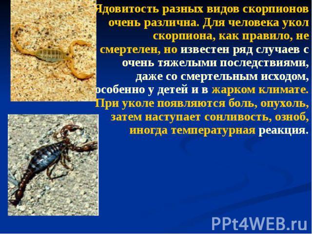 Ядовитость разных видов скорпионов очень различна. Для человека укол скорпиона, как правило, не смертелен, но известен ряд случаев с очень тяжелыми последствиями, даже со смертельным исходом, особенно у детей и в жарком климате. При уколе появляются…