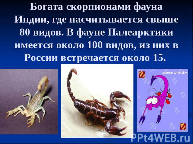 Богата скорпионами фауна Индии, где насчитывается свыше 80 видов. В фауне Палеарктики имеется около 100 видов, из них в России встречается около 15.