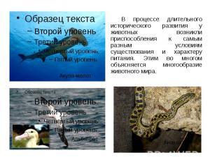 В процессе длительного исторического развития у животных возникли приспособления