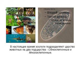 В настоящее время зоологи подразделяют царство животных на два подцарства - Одно