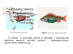 В отличие от растений, грибов и бактерий у большинства животных имеются системы