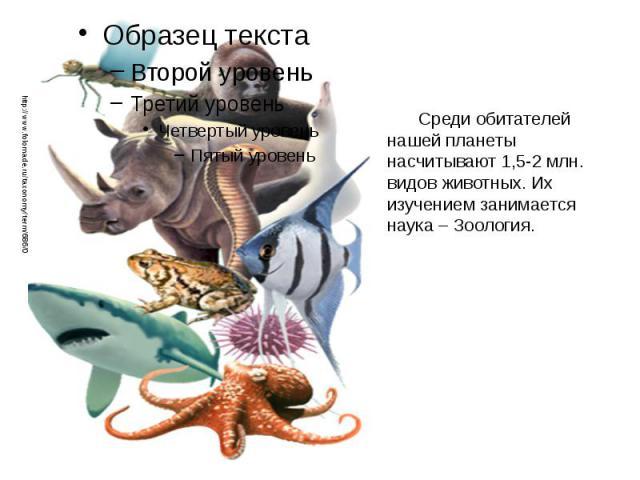 Среди обитателей нашей планеты насчитывают 1,5-2 млн. видов животных. Их изучением занимается наука – Зоология. Среди обитателей нашей планеты насчитывают 1,5-2 млн. видов животных. Их изучением занимается наука – Зоология.