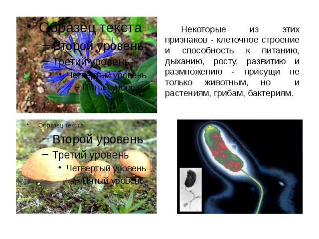 Некоторые из этих признаков - клеточное строение и способность к питанию, дыханию, росту, развитию и размножению - присущи не только животным, но и растениям, грибам, бактериям. Некоторые из этих признаков - клеточное строение и способность к питани…