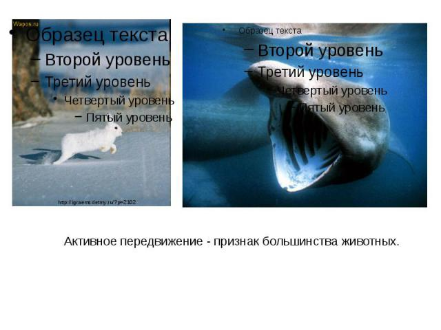 Активное передвижение - признак большинства животных. Активное передвижение - признак большинства животных.