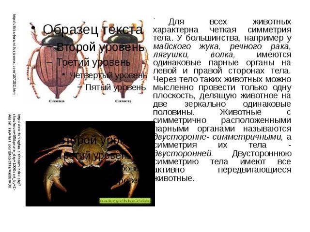 Для всех животных характерна четкая симметрия тела. У большинства, например у майского жука, речного рака, лягушки, волка, имеются одинаковые парные органы на левой и правой сторонах тела. Через тело таких животных можно мысленно провести только одн…