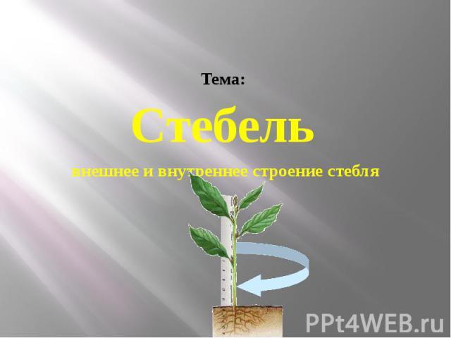 Тема: Стебель внешнее и внутреннее строение стебля