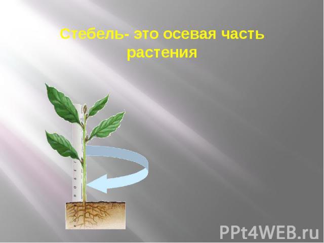 Стебель- это осевая часть растения