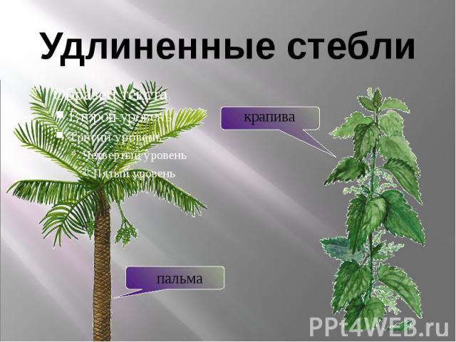 Удлиненные стебли