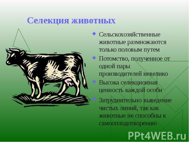 Селекция животных Сельскохозяйственные животные размножаются только половым путем Потомство, полученное от одной пары производителей невелико Высока селекционная ценность каждой особи Затруднительно выведение чистых линий, так как животные не способ…
