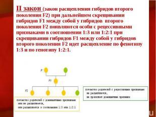 II закон (закон расщепления гибридов второго поколения F2) при дальнейшем скрещи