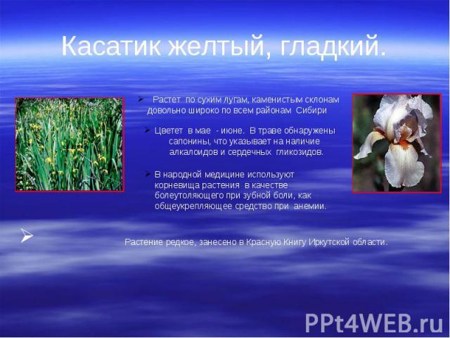 Касатик желтый, гладкий. Растение редкое, занесено в Красную Книгу Иркутской области.