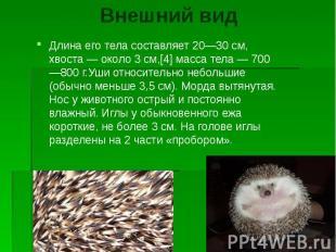 Внешний вид Длина его тела составляет 20—30 см, хвоста — около 3 см,[4] масса те