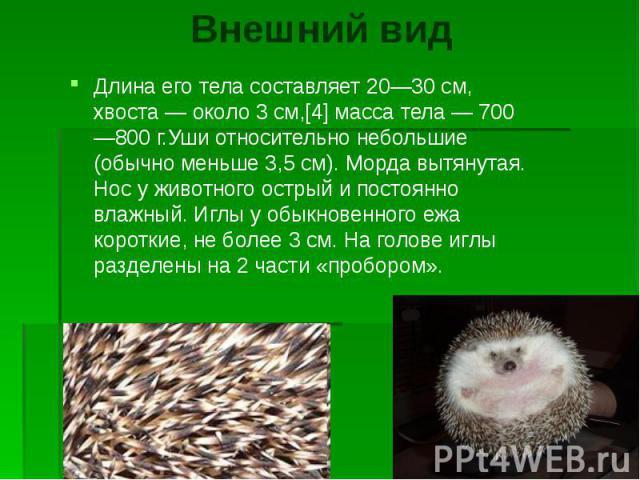 Внешний вид Длина его тела составляет 20—30 см, хвоста — около 3 см,[4] масса тела — 700—800 г.Уши относительно небольшие (обычно меньше 3,5 см). Морда вытянутая. Нос у животного острый и постоянно влажный. Иглы у обыкновенного ежа короткие, не боле…