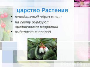 царство Растения неподвижный образ жизни на свету образуют органические вещества