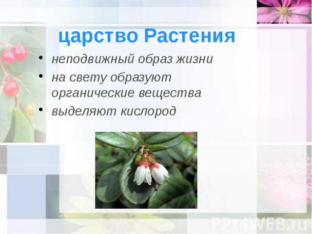царство Растения неподвижный образ жизни на свету образуют органические вещества выделяют кислород