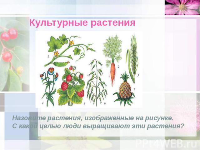 Культурные растения