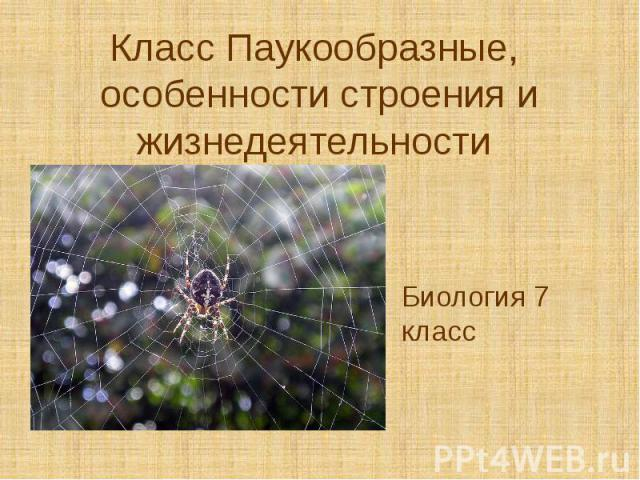 Класс Паукообразные, особенности строения и жизнедеятельности Биология 7 класс