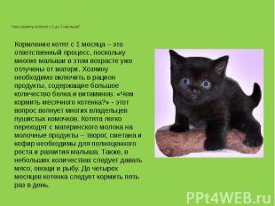 Чем кормить котенка с 1 до 3 месяцев?