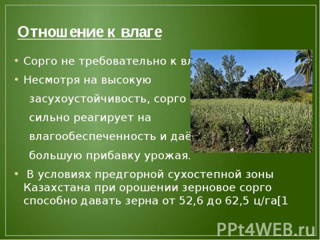 Отношение к влаге Сорго не требовательно к влаге Несмотря на высокую засухоустойчивость, сорго сильно реагирует на влагообеспеченность и даёт большую прибавку урожая. В условиях предгорной сухостепной зоны Казахстана при орошении зерновое сорго спос…