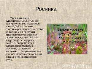 Росянка У росянки очень чувствительные листья, они реагируют на вес насекомого в