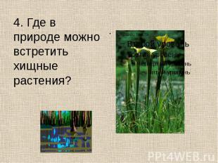 4. Где в природе можно встретить хищные растения? 4. Где в природе можно встрети