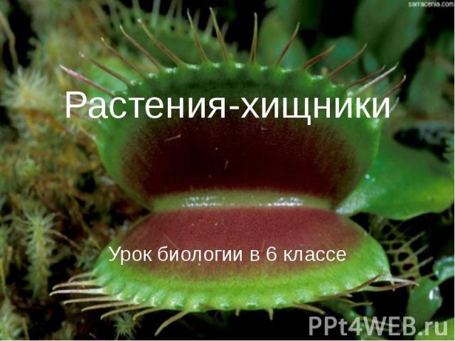 Растения-хищники Урок биологии в 6 классе