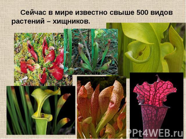Сейчас в мире известно свыше 500 видов растений – хищников. Сейчас в мире известно свыше 500 видов растений – хищников.