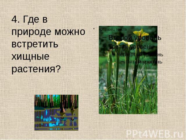 4. Где в природе можно встретить хищные растения? 4. Где в природе можно встретить хищные растения?