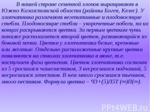 В нашей стране семенной хлопок выращивают в Южно-Казахстанской области (районы Б