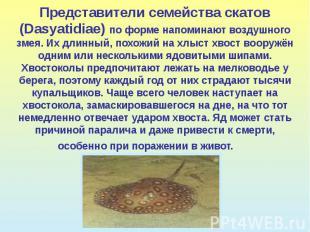 Представители семейства скатов (Dasyatidiae) по форме напоминают воздушного змея