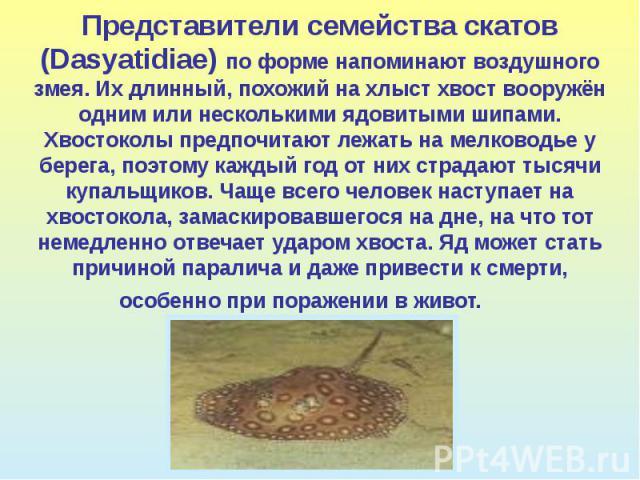 Представители семейства скатов (Dasyatidiae) по форме напоминают воздушного змея. Их длинный, похожий на хлыст хвост вооружён одним или несколькими ядовитыми шипами. Хвостоколы предпочитают лежать на мелководье у берега, поэтому каждый год от них ст…