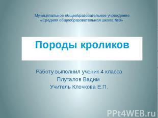 Породы кроликов Работу выполнил ученик 4 класса Плуталов Вадим Учитель Клочкова