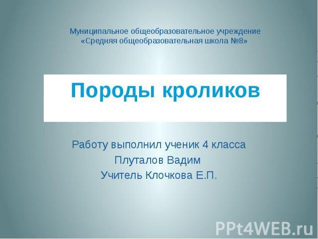 Породы кроликов Работу выполнил ученик 4 класса Плуталов Вадим Учитель Клочкова Е.П.
