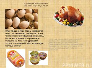 От домашней птицы получают: яйцо, мясо, перо и пух, помет. Яйцо птицы. В яйце пт