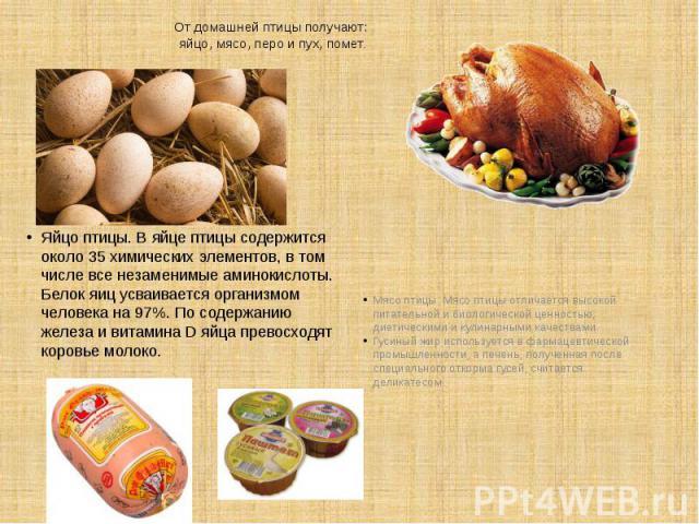 От домашней птицы получают: яйцо, мясо, перо и пух, помет. Яйцо птицы. В яйце птицы содержится около 35 химических элементов, в том числе все незаменимые аминокислоты. Белок яиц усваивается организмом человека на 97%. По содержанию железа и витамина…