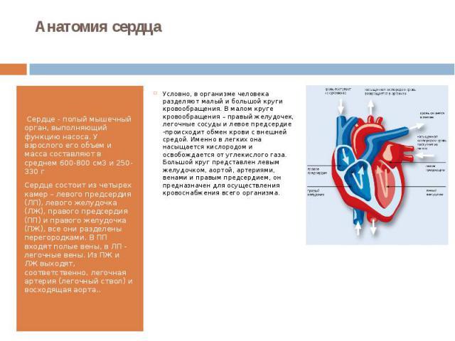 Анатомия сердца Сердце - полый мышечный орган, выполняющий функцию насоса. У взрослого его объем и масса составляют в среднем 600-800 см3 и 250- 330 г Сердце состоит из четырех камер – левого предсердия (ЛП), левого желудочка (ЛЖ), правого пре…