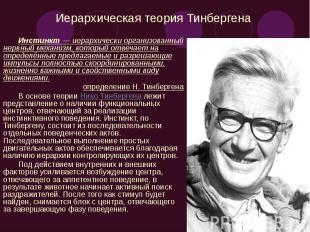 Иерархическая теория Тинбергена Инстинкт — иерархически организованный нервный м