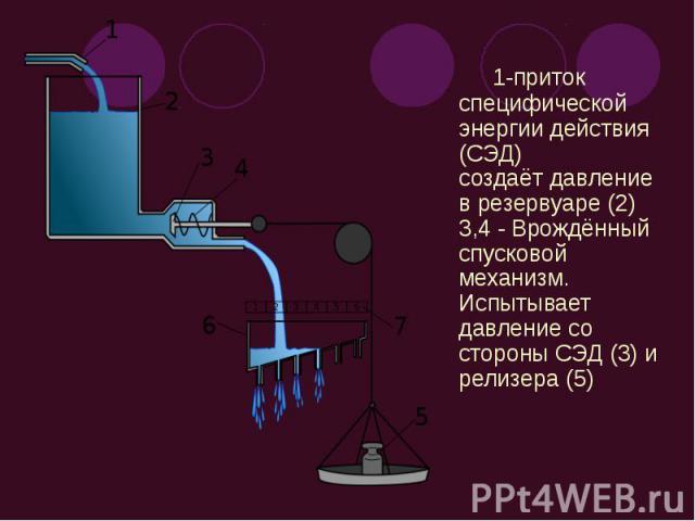 1-приток специфической энергии действия (СЭД) создаёт давление в резервуаре (2) 3,4 - Врождённый спусковой механизм. Испытывает давление со стороны СЭД (3) и релизера (5) 1-приток специфической энергии действия (СЭД) создаёт давление в резервуаре (2…