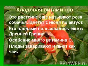 Кладовая витаминов Это растение еще называют роза собачья. Цветет с июня по авгу