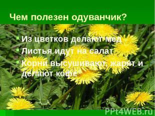 Чем полезен одуванчик? Из цветков делают мед Листья идут на салат Корни высушива