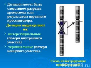 Делеция может быть следствием разрыва хромосомы или результатом неравного кросси